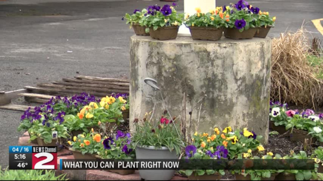 What you can start planting in your garden right now