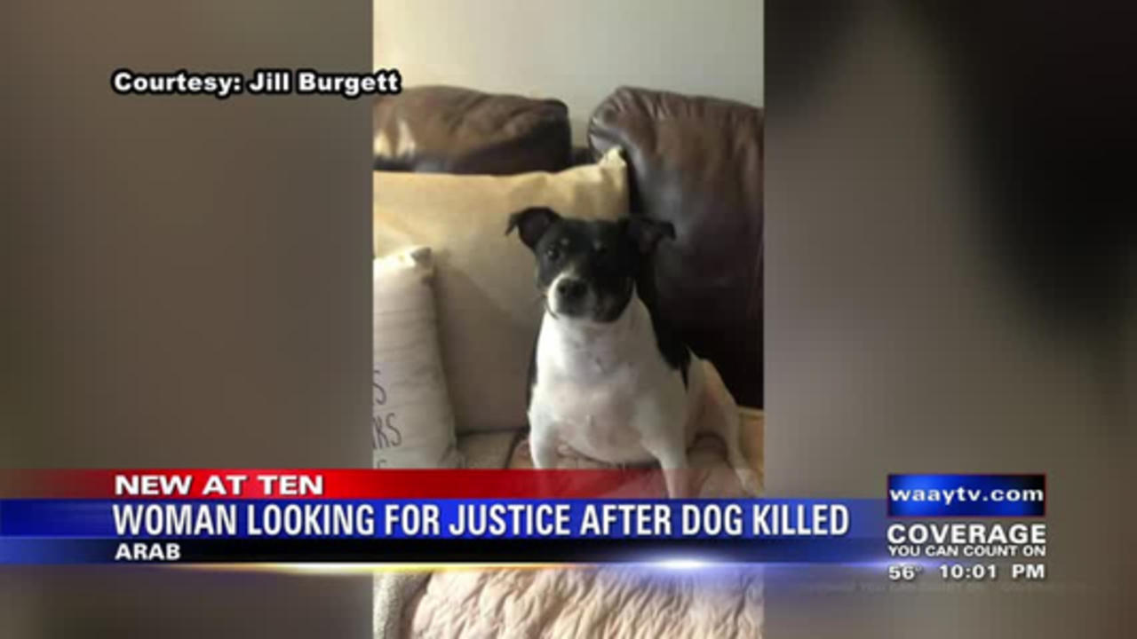 Woman looking for justice after dog killed