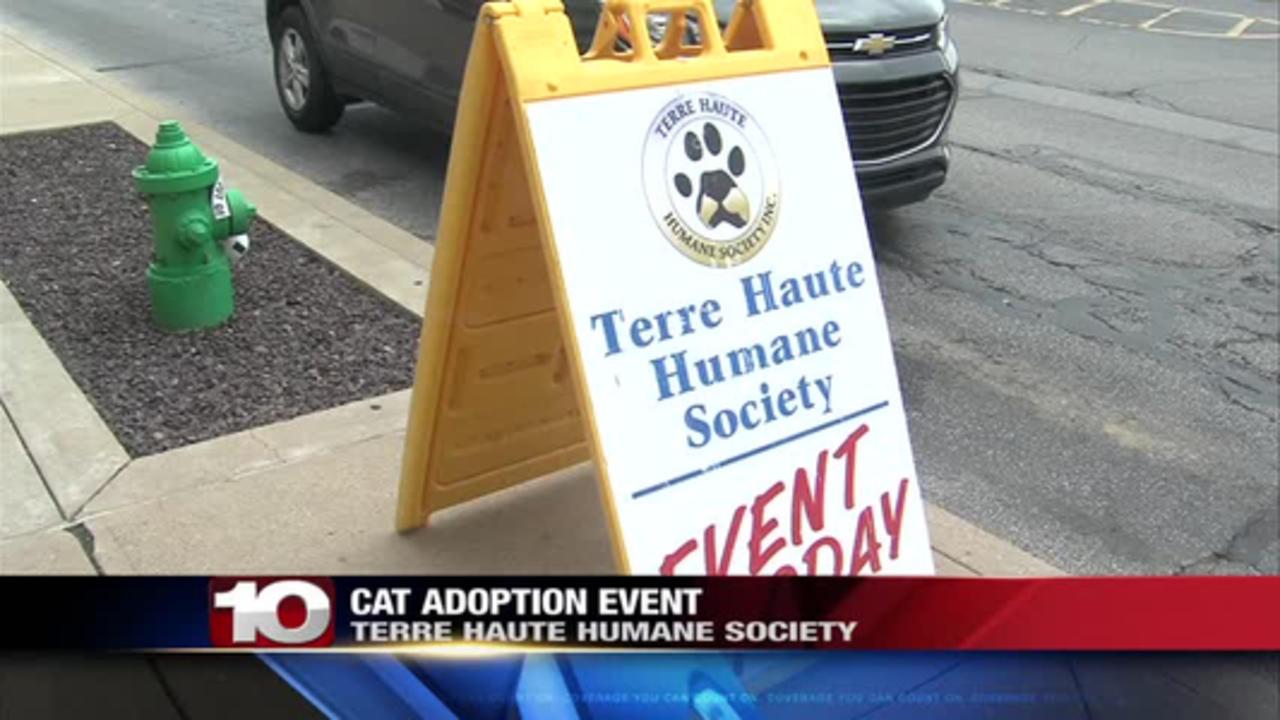cat adoption event