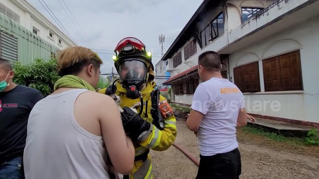 Four cats rescued from burning house in Thailand