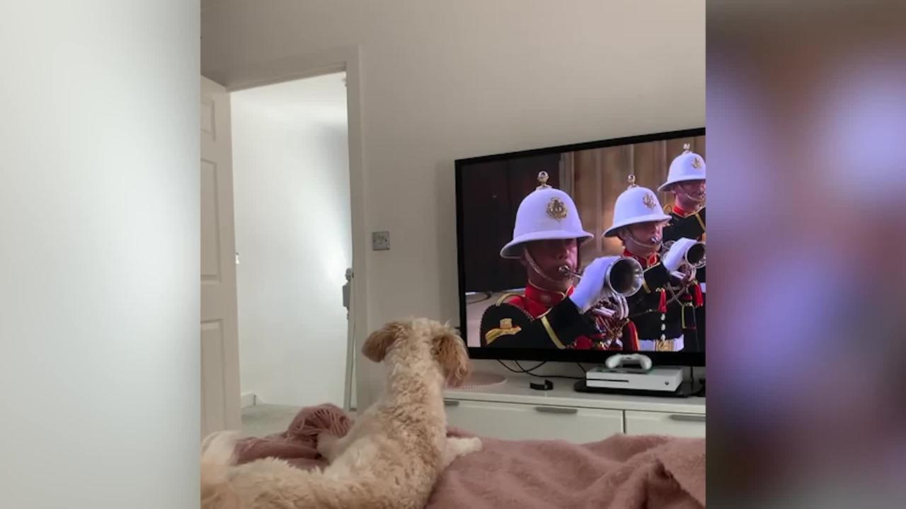 Patriotic dog pays his respects to late Prince Philip by howling at The Last Post while watching funeral on TV