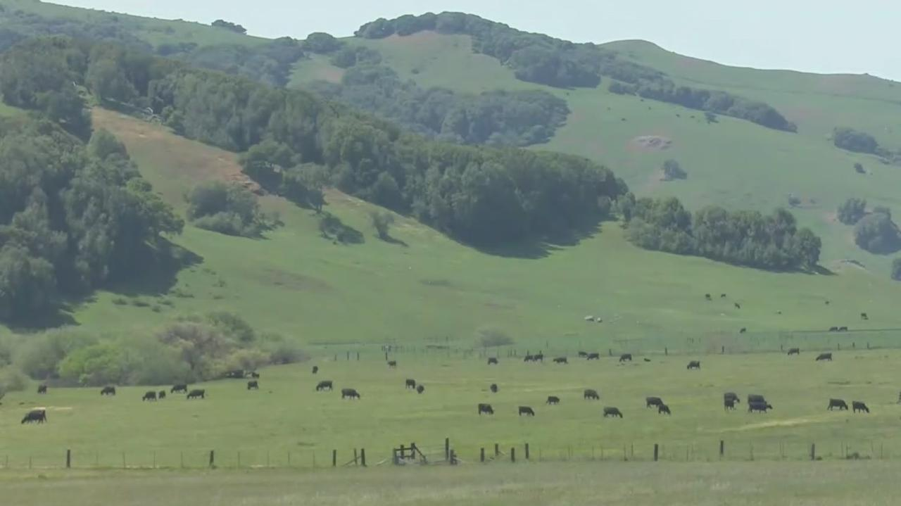 North Bay Ranchers Already Struggling With Drought Conditions Before Emergency Declaration