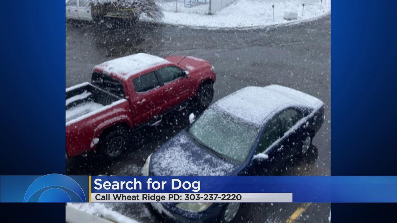 Truck Stolen With Dog Inside In Wheat Ridge