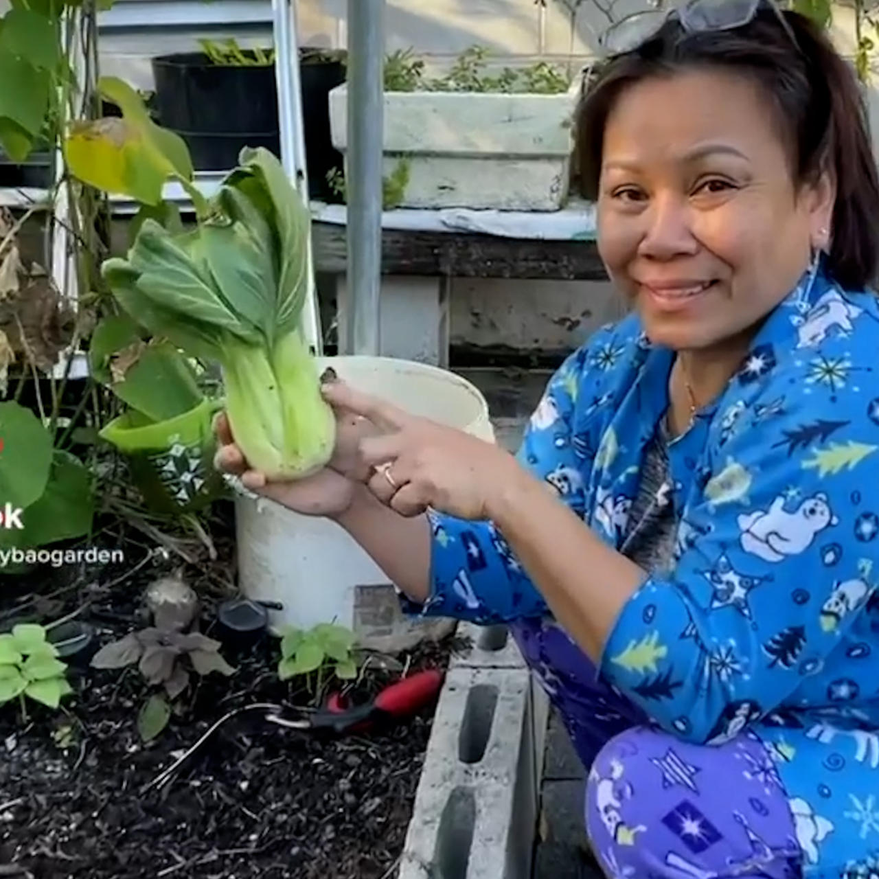 Mama Judy shares tips on how to regrow store-bought vegetables