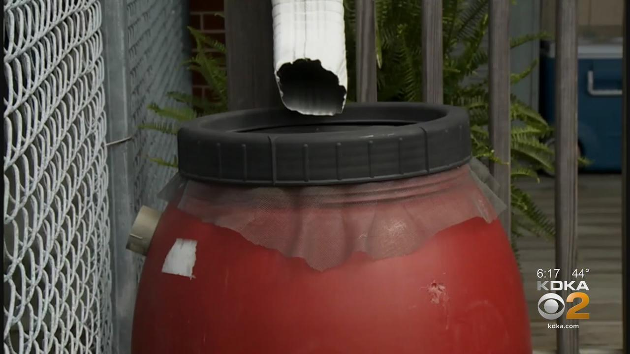 Rain Barrels Help You Conserve Water, And Keep Excess Water Out Of Storm Drains