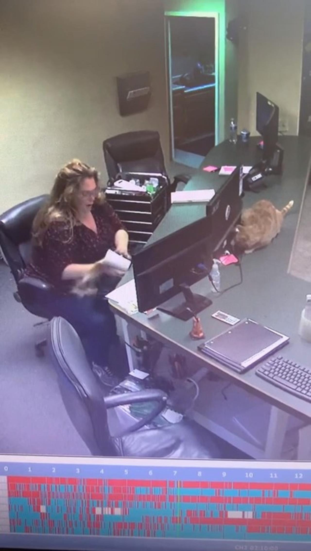 Sneaky Office Cat Knocks Over Cup From Under Computer Screen And Spills Coffee on Woman