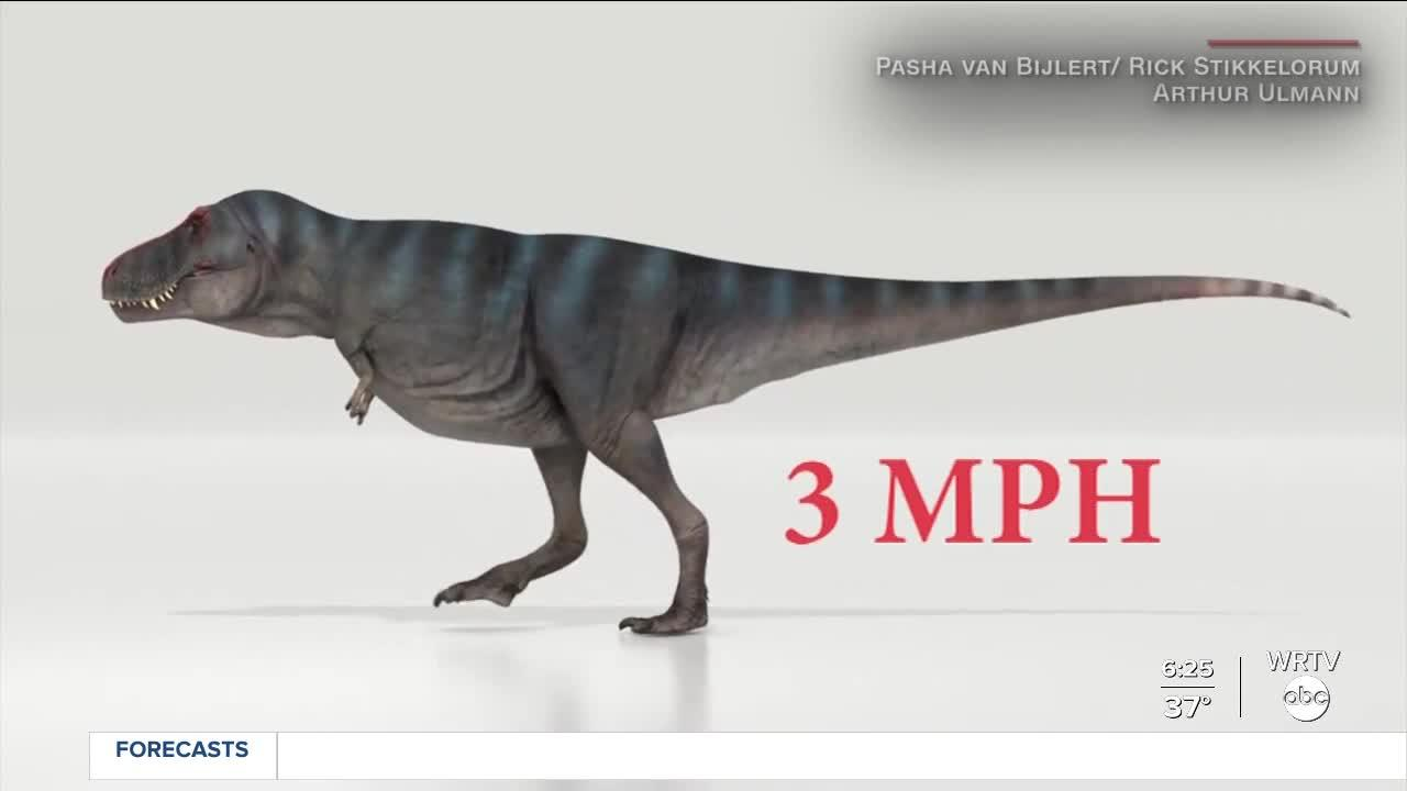 T. rex slower than originally thought
