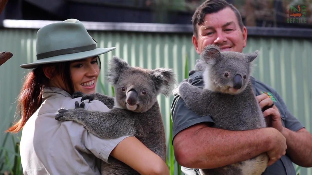Due femmine di koala in dolce attesa insieme: sono mamma e figlia!
