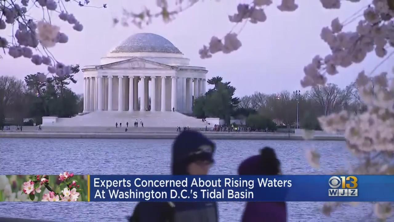 Experts Concerned About Rising Waters At Washington DC's Tidal Basin