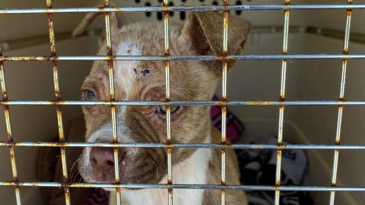 Puppy dumped at shelter keeps going in circles
