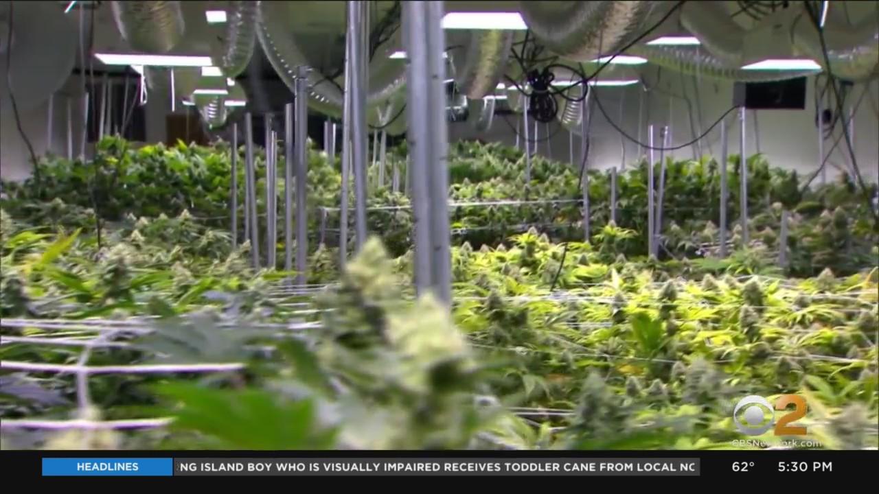 Many New Jersey Municipalities Banning Dispensaries, Pot Farms, Manufacturing