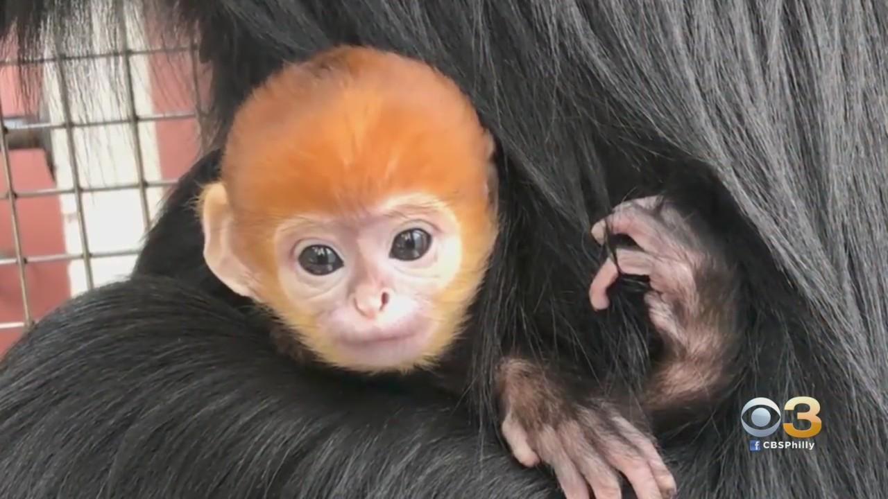 Philadelphia Zoo Welcomes Adorable New Addition