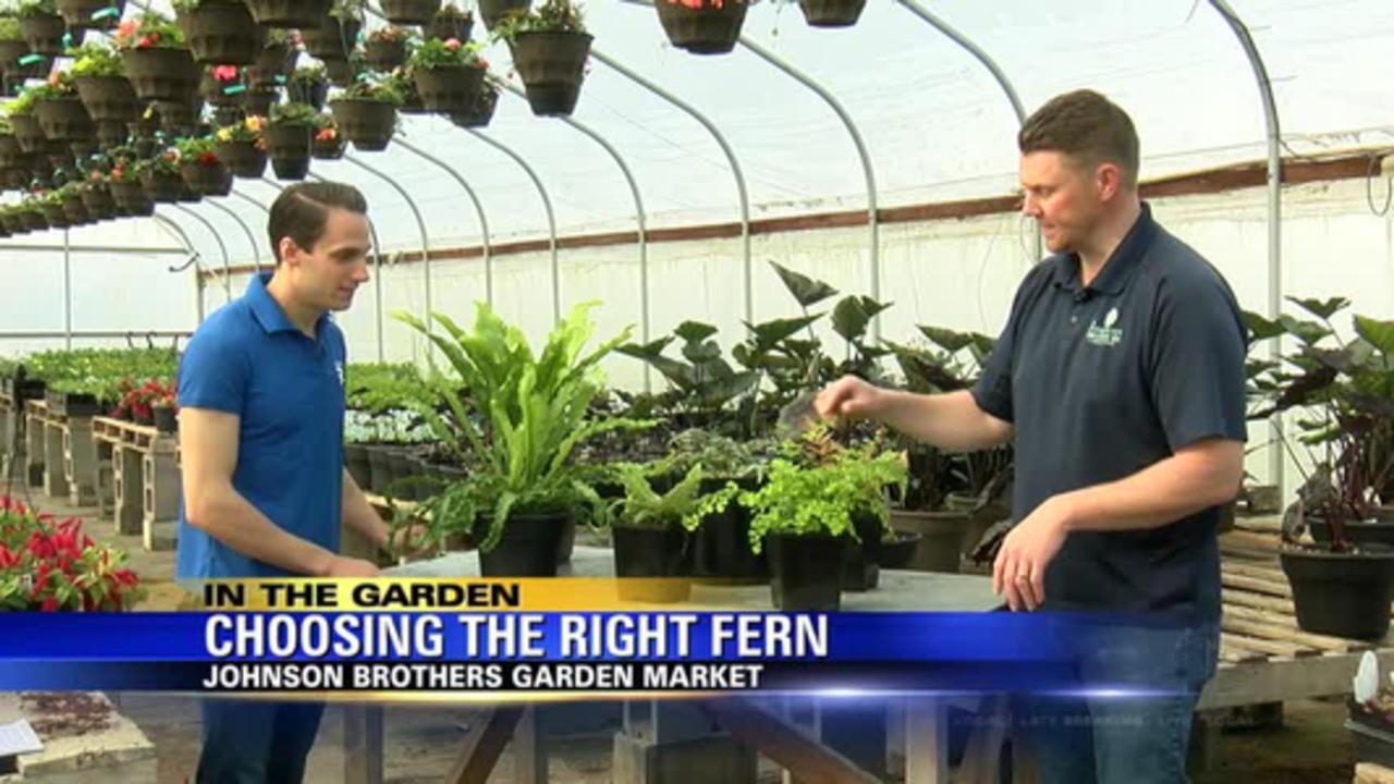 In The Garden: Planting ferns
