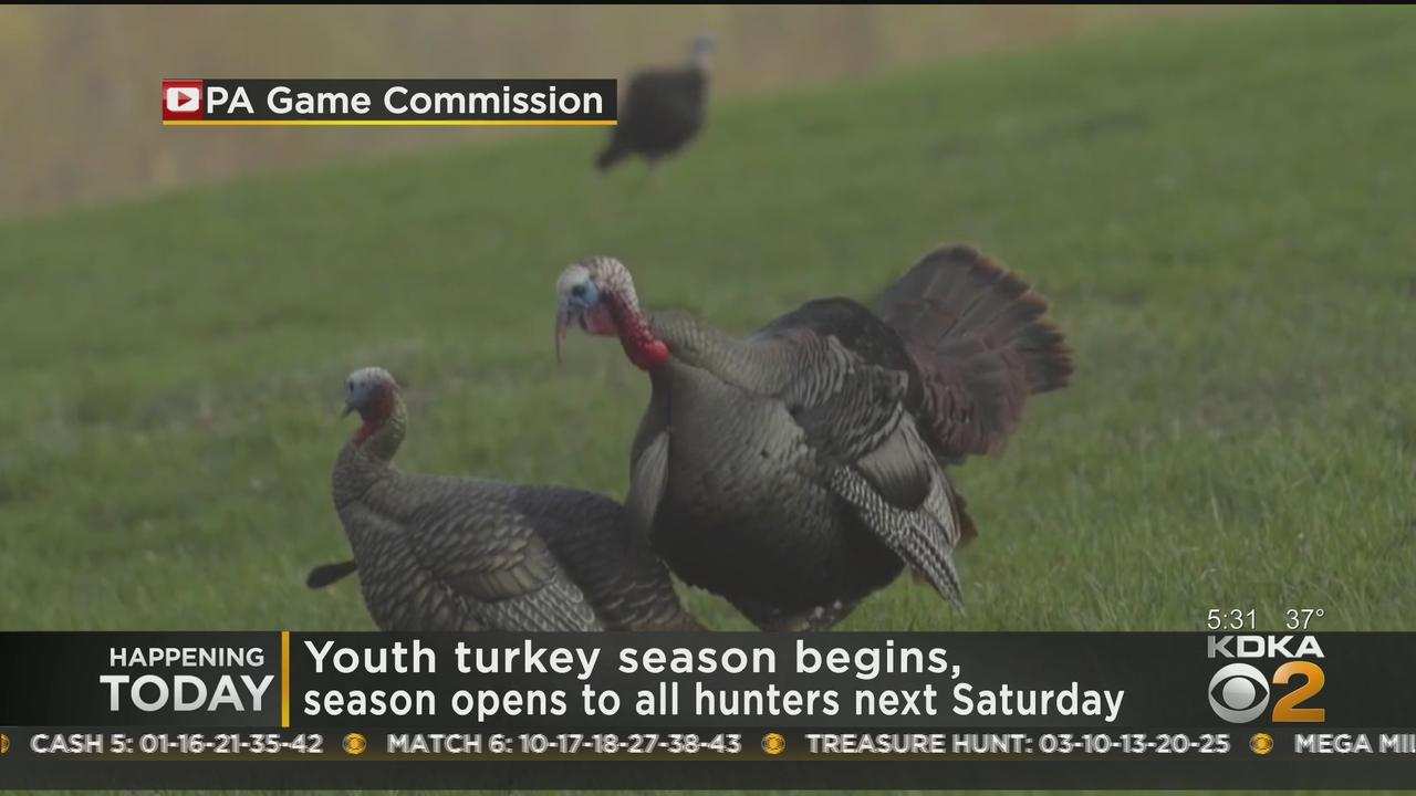 Youth Turkey Season Begins, Season Opens To All Hunters Next Saturday