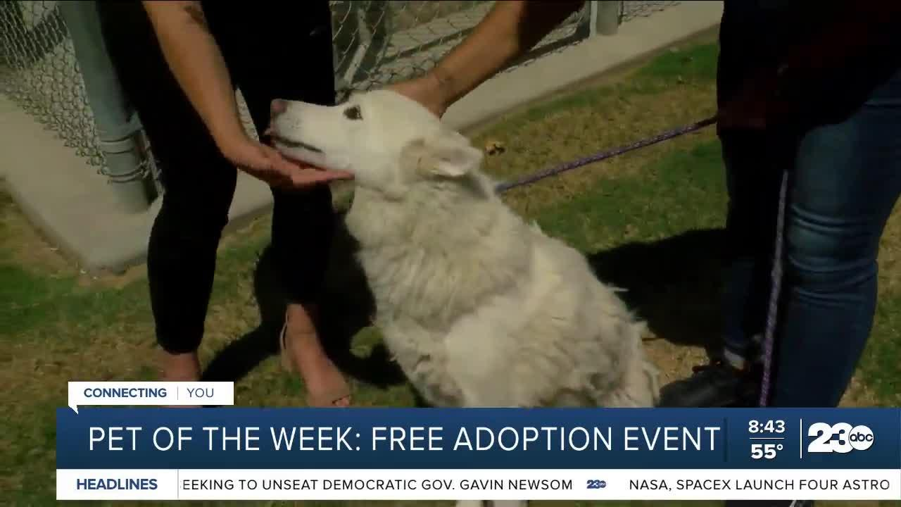 Pet of the Week: Free adoption event