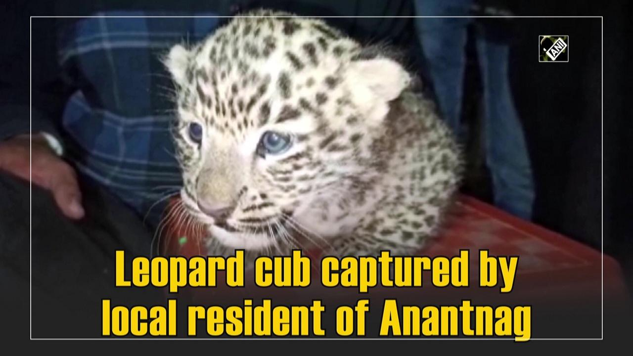 Leopard cub captured by local resident of Anantnag