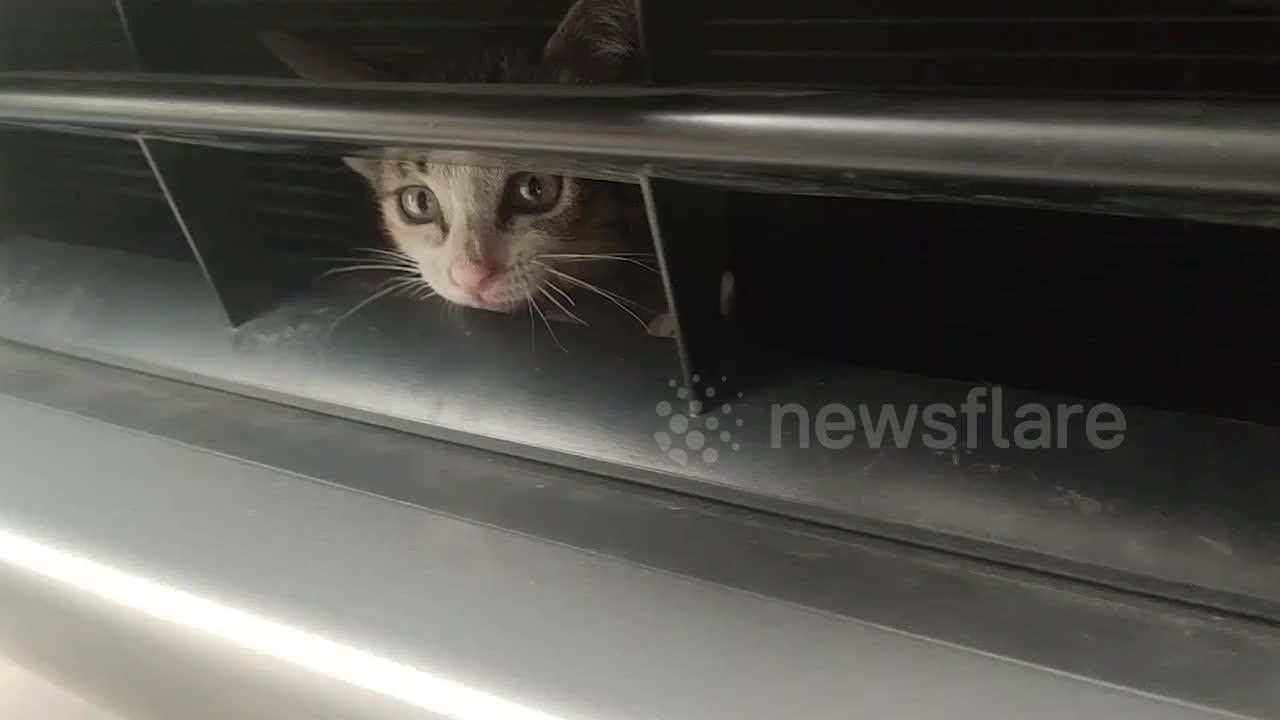 Rescue teams save kitten stuck under car engine in Thailand