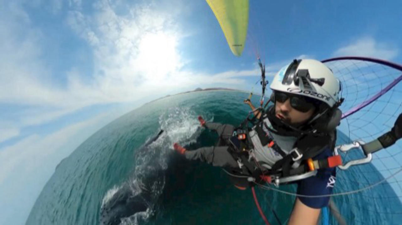 Check Out The Amazing Footage of a Paramotor Pilot's Close Encounter with Two Blue Whales