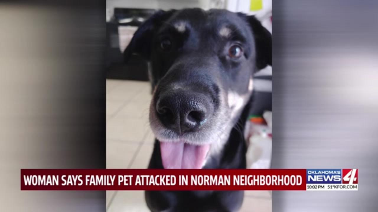 Oklahoma neighborhood on edge after dog allegedly chases girl, attacks second dog while kids return from school