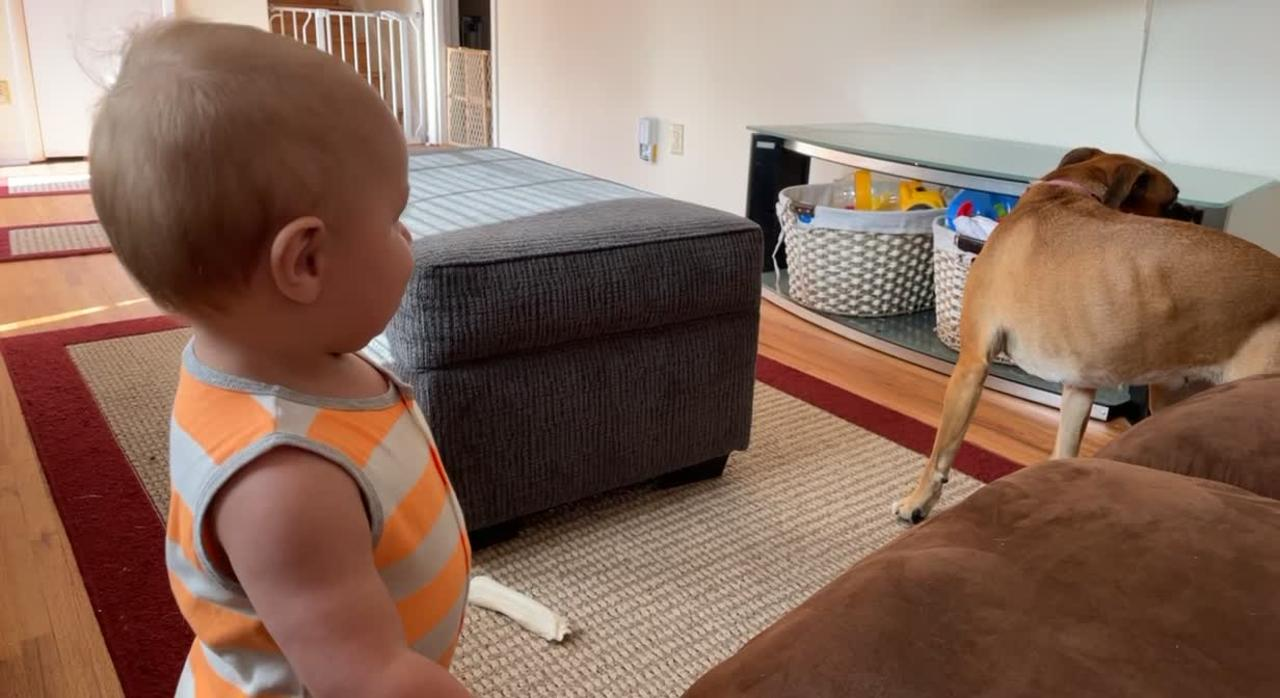Watch this adorable video of a giggling toddler trying to imitate his dog's tail-chasing antics