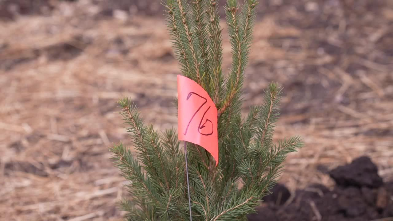 Community comes together to plant trees as a way to address traffic and pollution