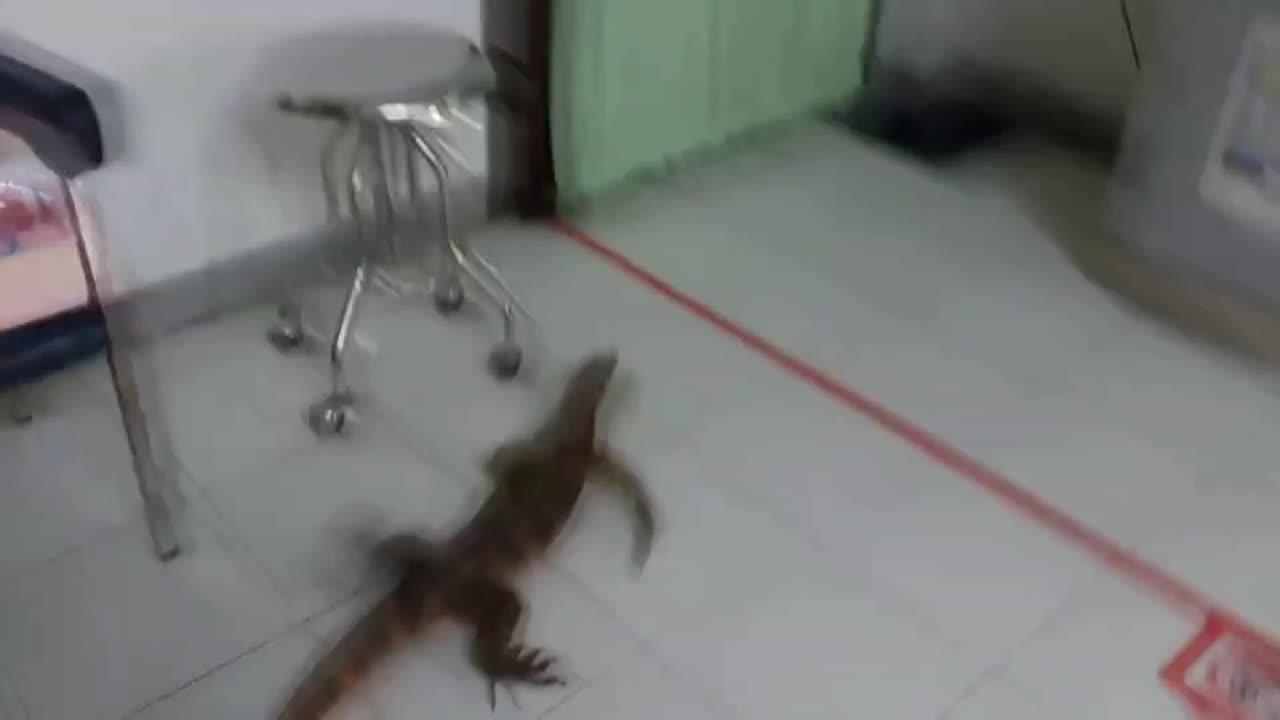 Look at its claws! Monitor lizard rampages through hospital in Thailand