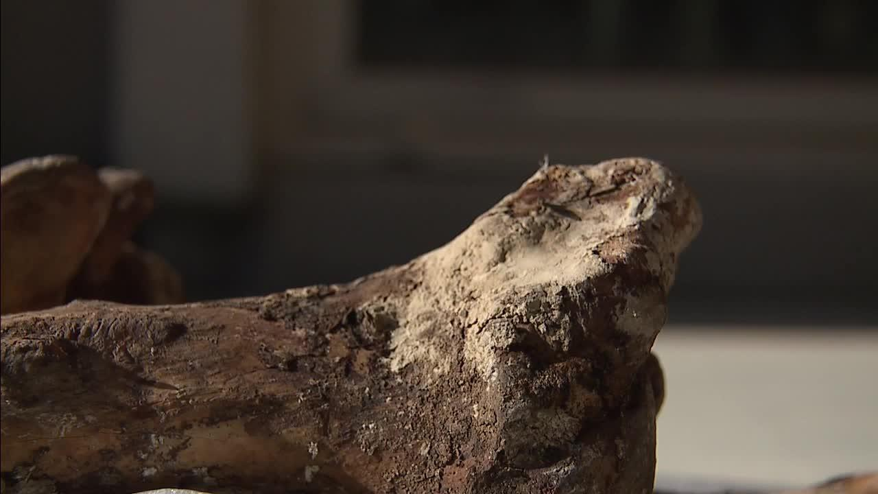 Parts of jaw and teeth found in Las Vegas backyard