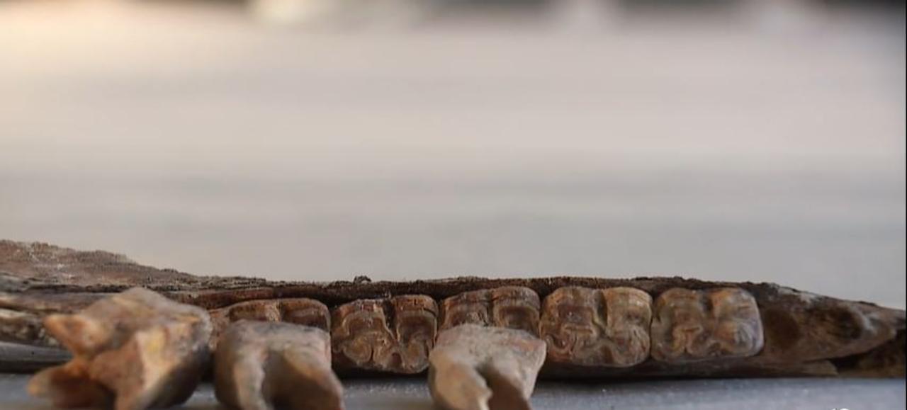 Major new clue found may unlock Las Vegas ice age backyard bone mystery