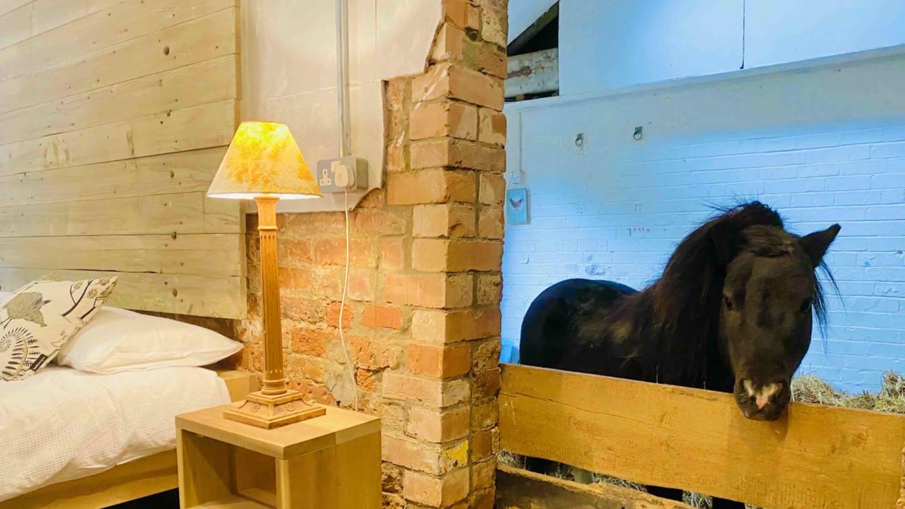 Ein Pony als Zimmernachbar: Urige Unterkunft in britischem Airbnb