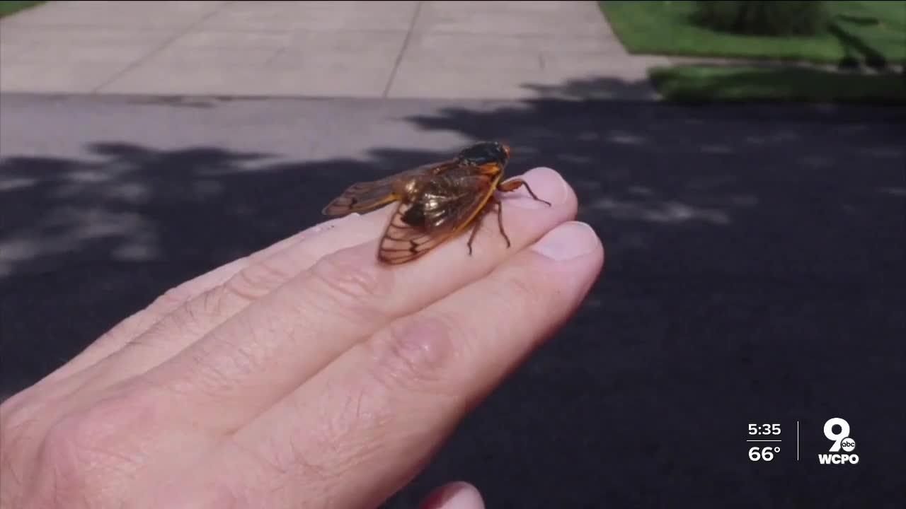 Cicada anxiety: It's real, and here's how to cope