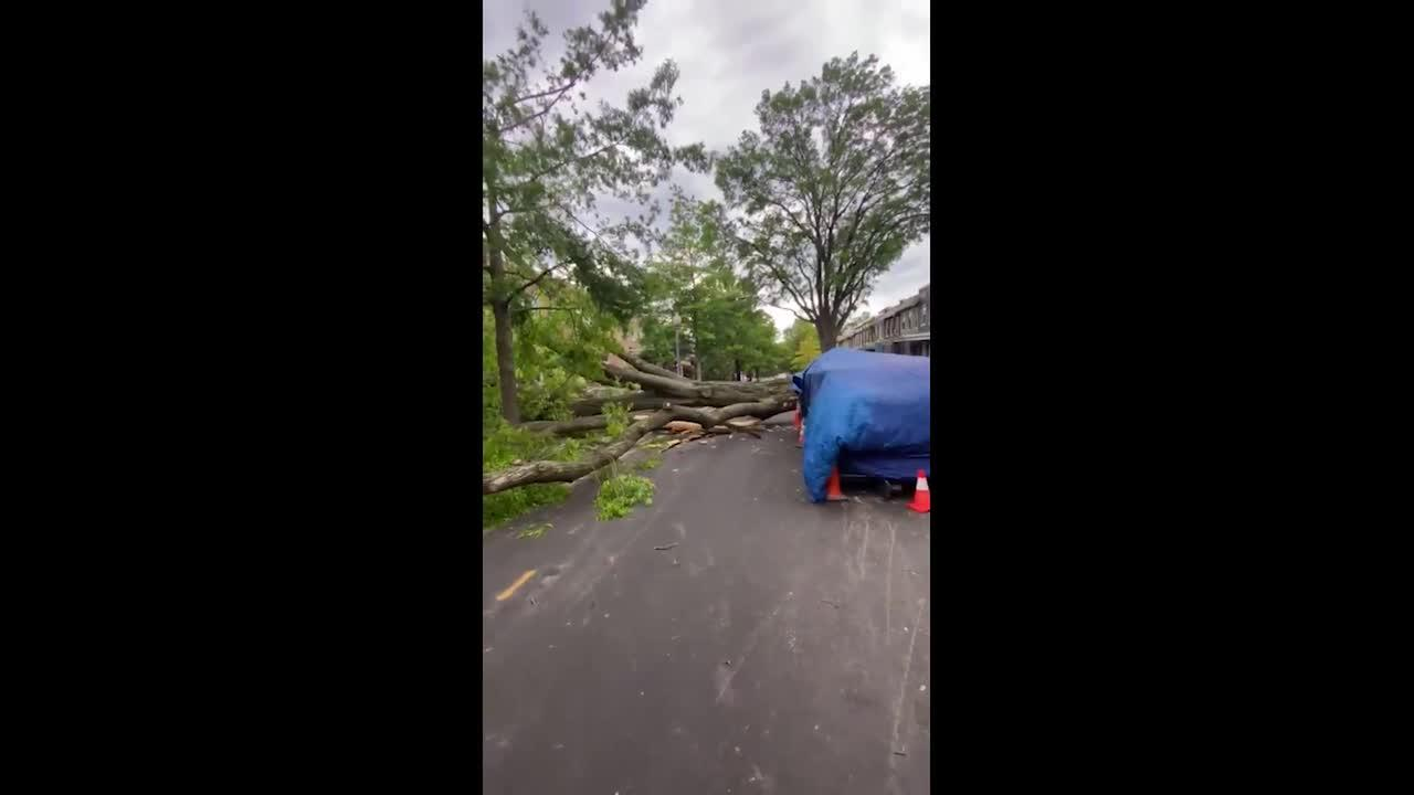 Damaging winds in Washington D.C. area cause downed trees, power outage