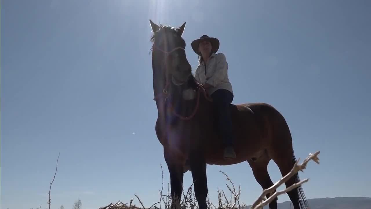Nevada woman embarking on 550-mile horse ride