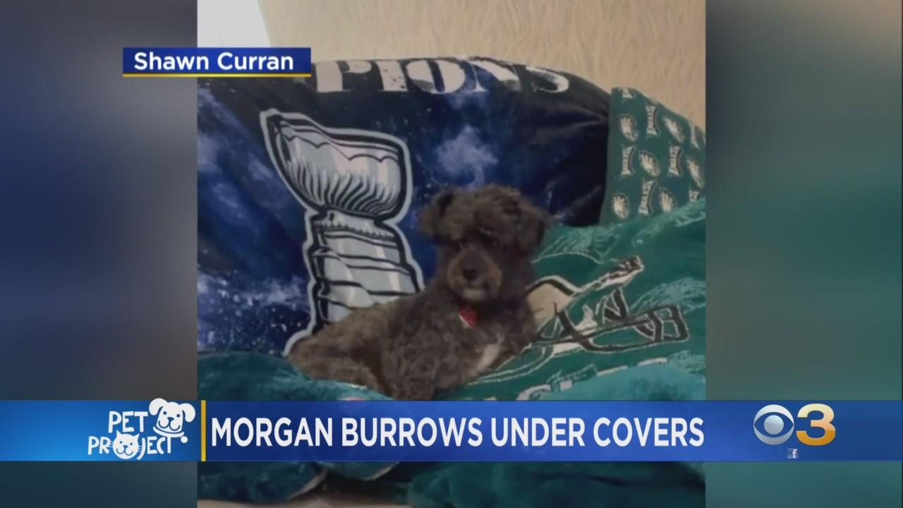 CBS3 Pet Project: Why Do Dogs Burrow?