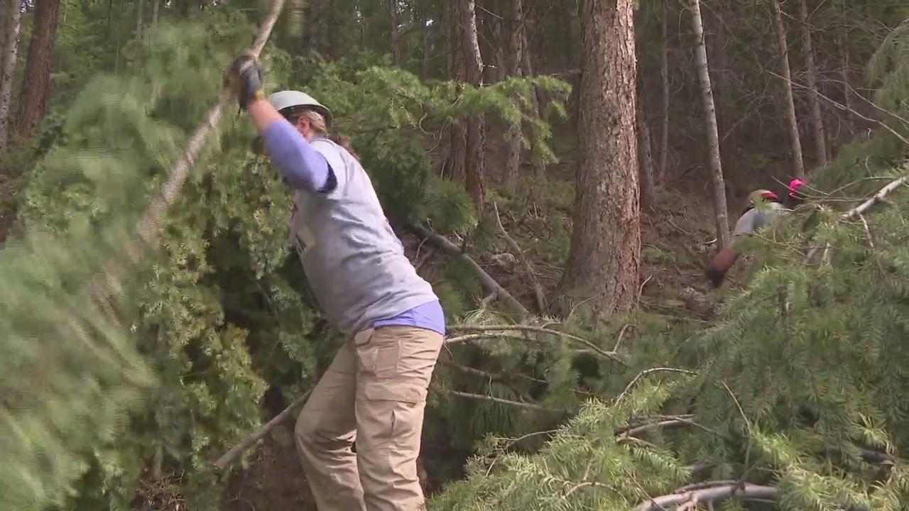 Volunteers Begin Mitigation Work Ahead of Wildfire Season
