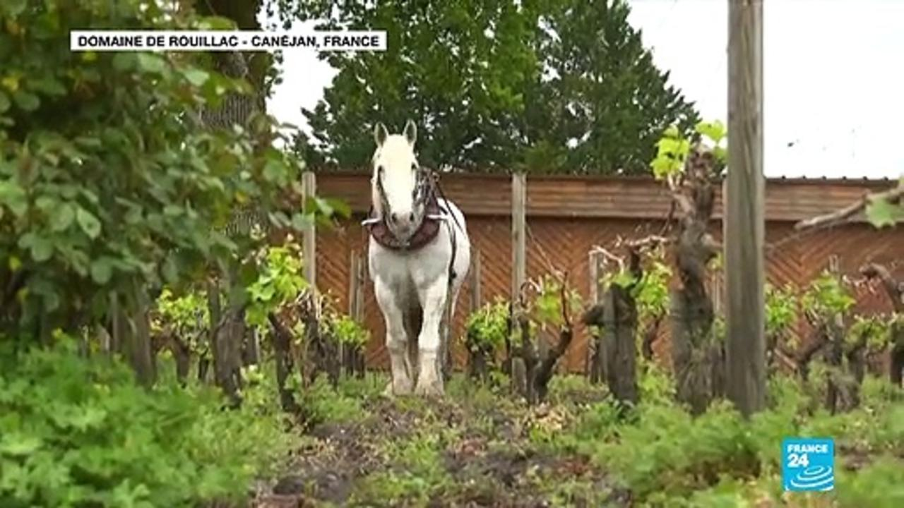 Bordeaux's famous wine producers get creative to ensure latest vintage is sampled