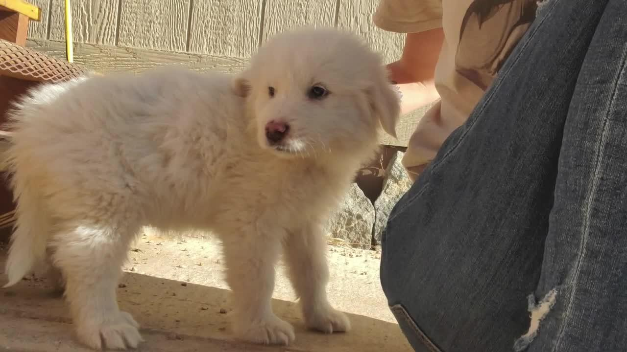 Park County woman warning others after being sold sick puppy on Craigslist
