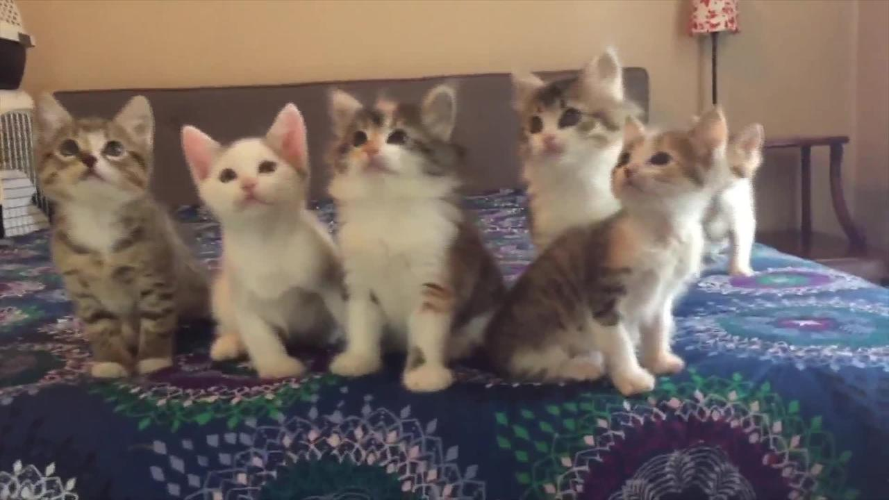 Kittens Adorably Moving Their Heads In Sync