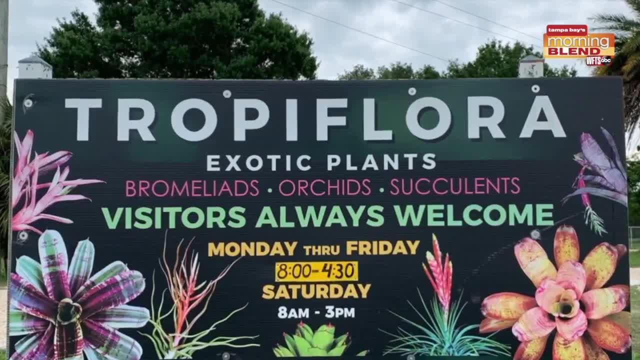 Tropiflora's tropical plants | Morning Blend