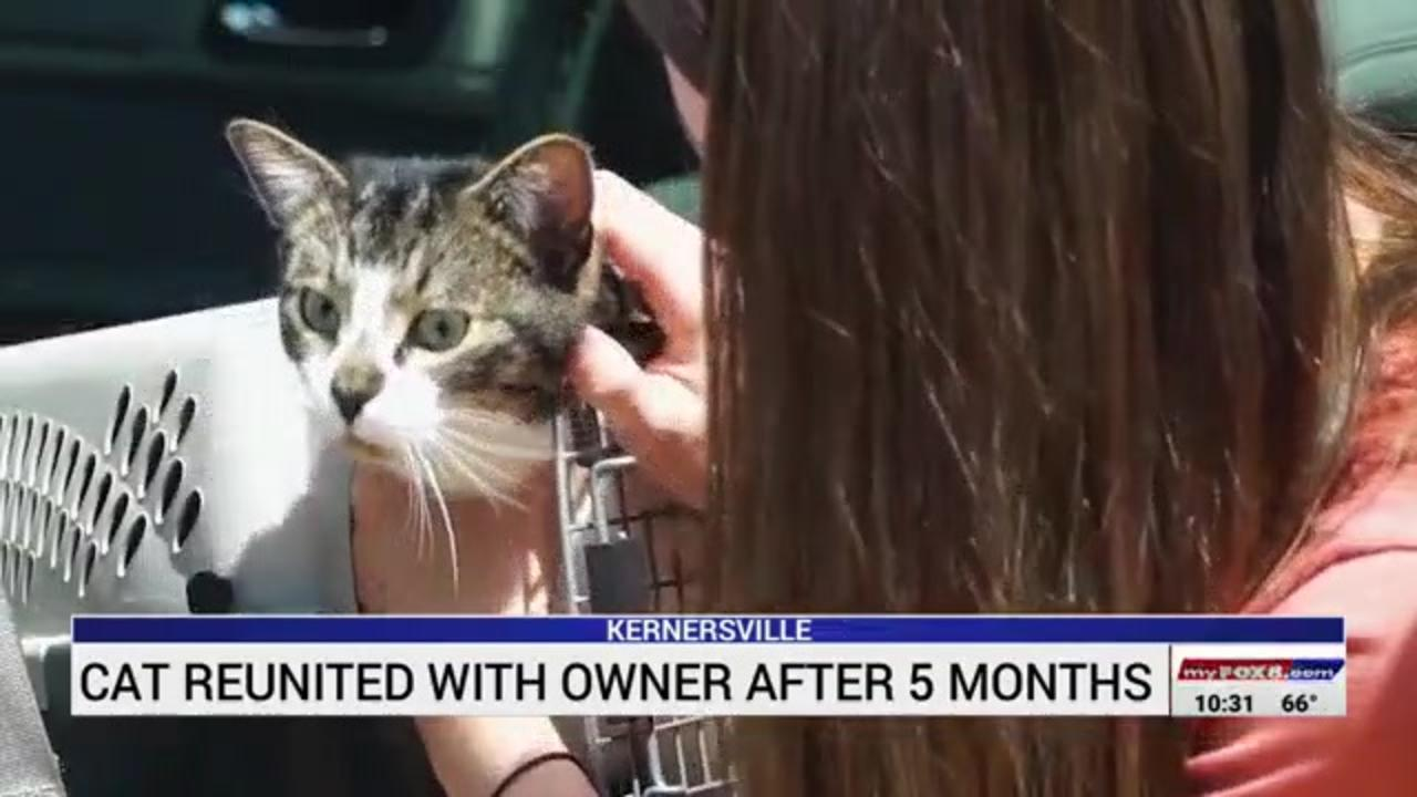 Cat reunited with owner five months after going missing