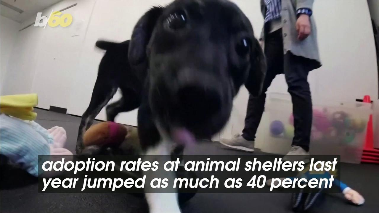 U.S. Pet Adoption Numbers Skyrocketed Last Year and Continue to Be Strong Today