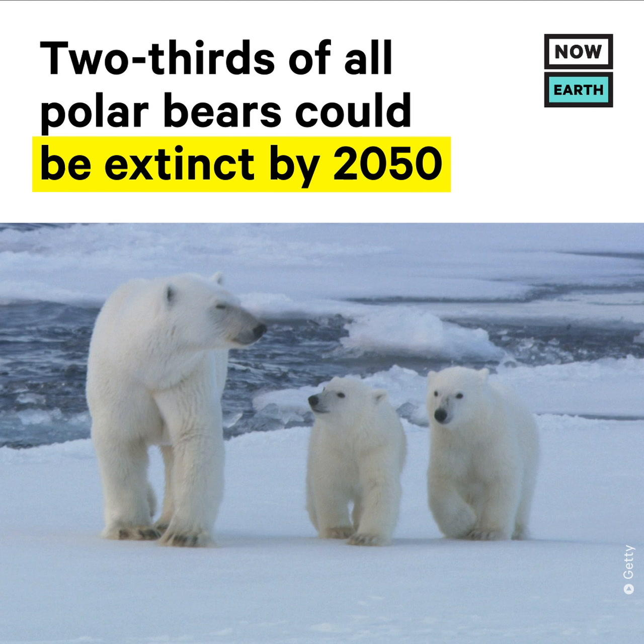 Two-Thirds of All Polar Bears Could be Extinct by 2050