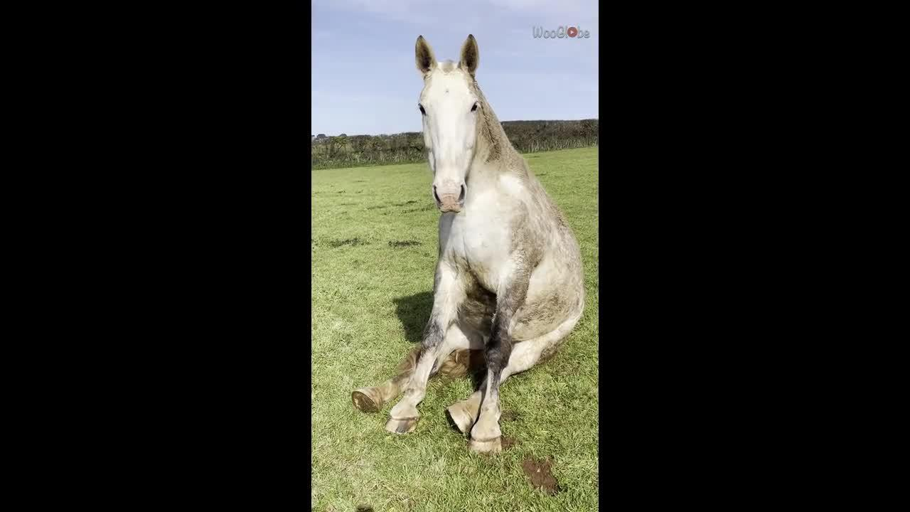 UK woman cannot stop laughing as she spots horse 'sitting like a dog'