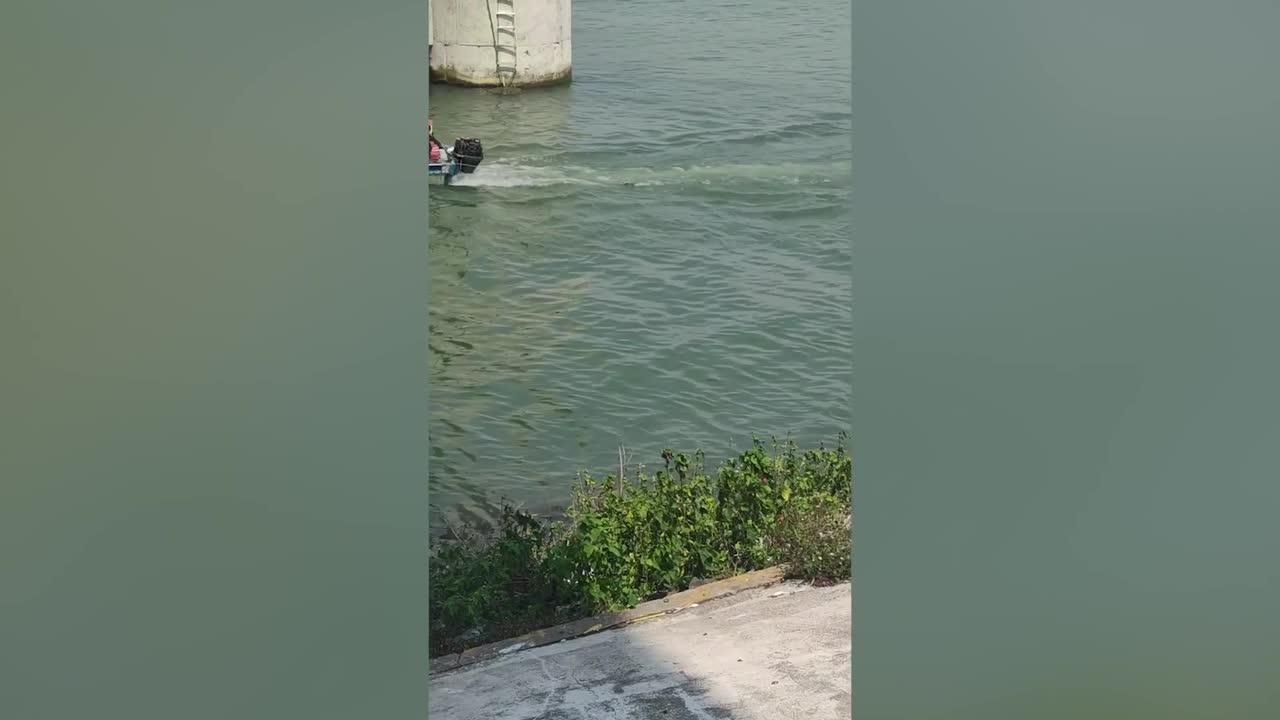 Ice-cool pet dog seen wakeboarding behind passing boat in Mexico