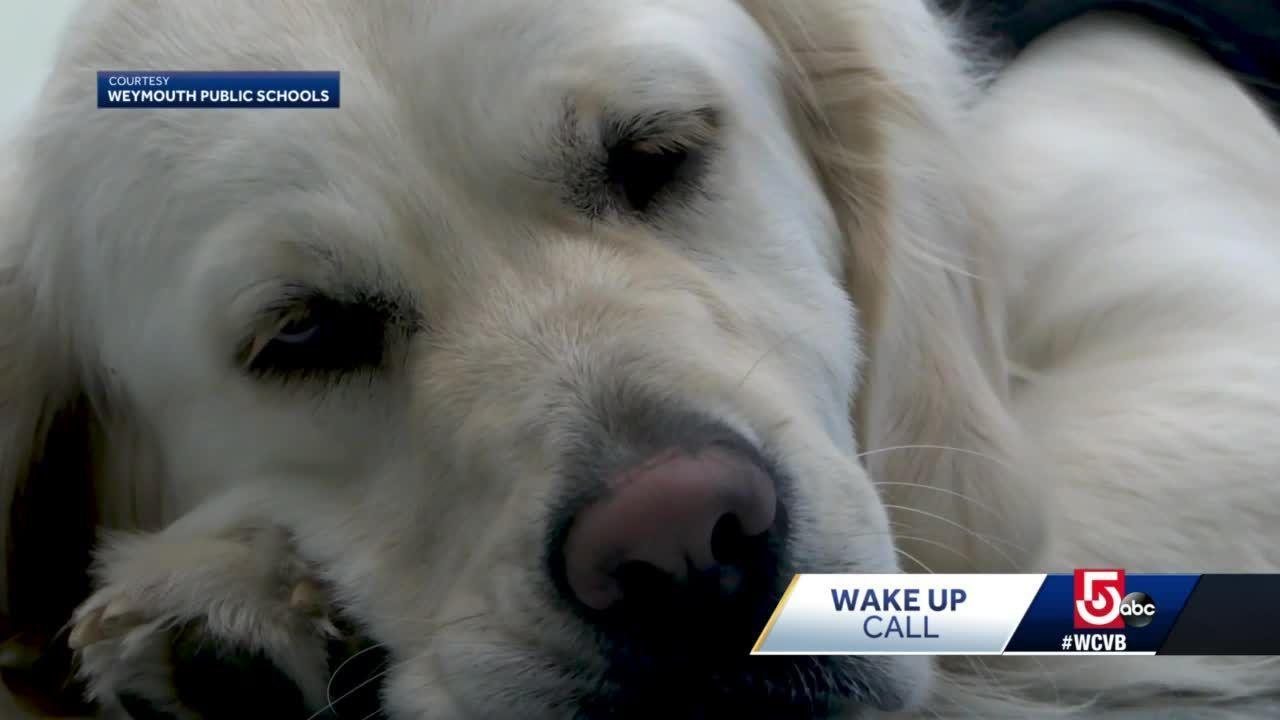 Wake Up Call: Weymouth's new community resource pup