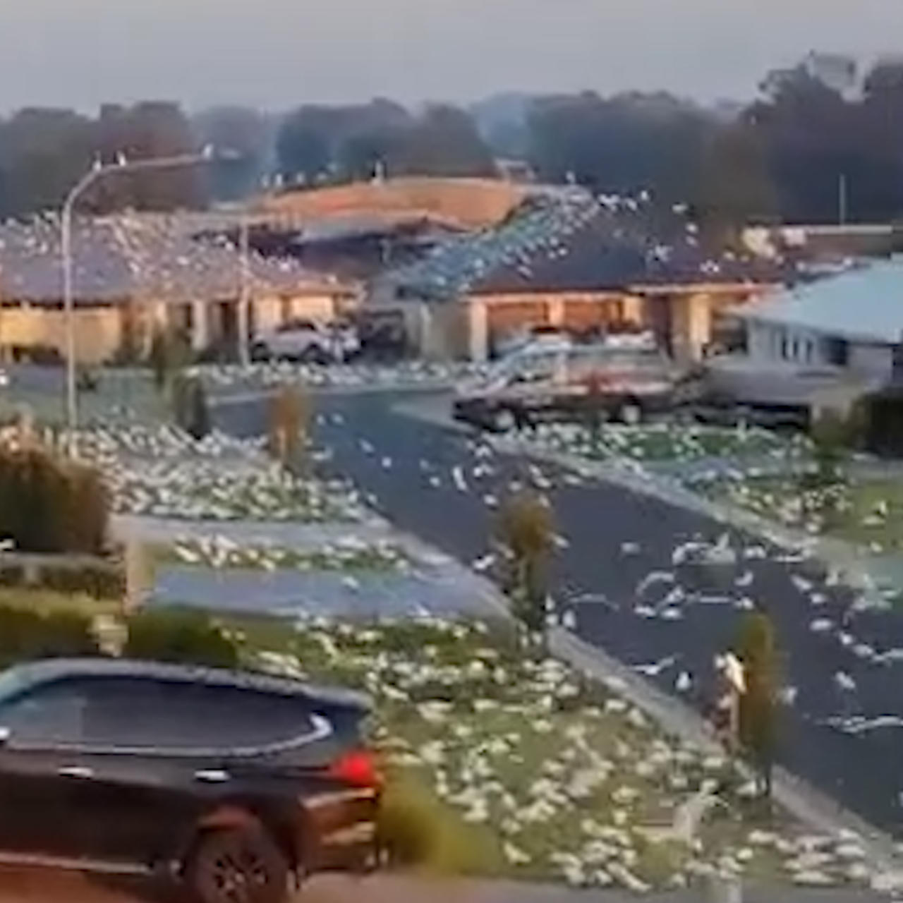 Thousands of birds invaded this Australian suburb, and it looks like something out of a horror movie