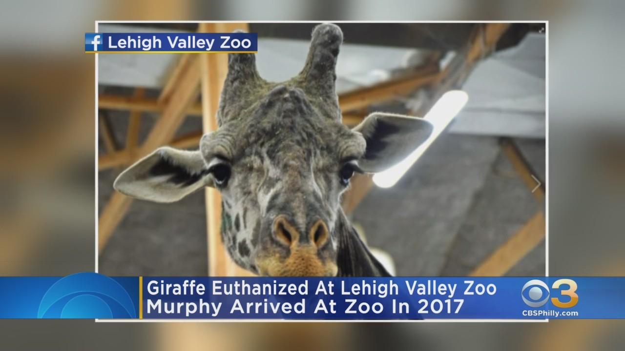 Lehigh Valley Zoo Mourns Death Of Giraffe
