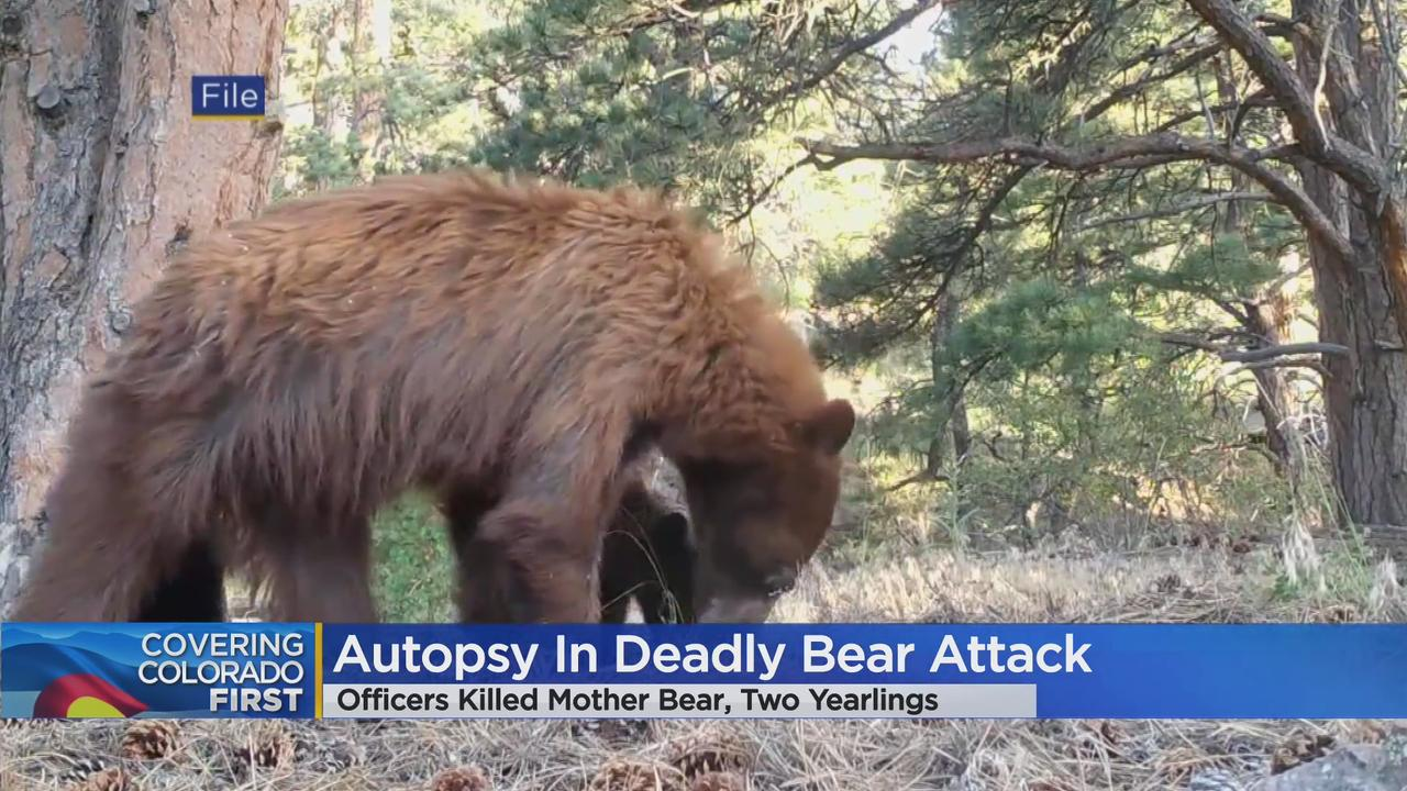 Laney Malavolta Identified As Woman Killed In Colorado Bear Attack