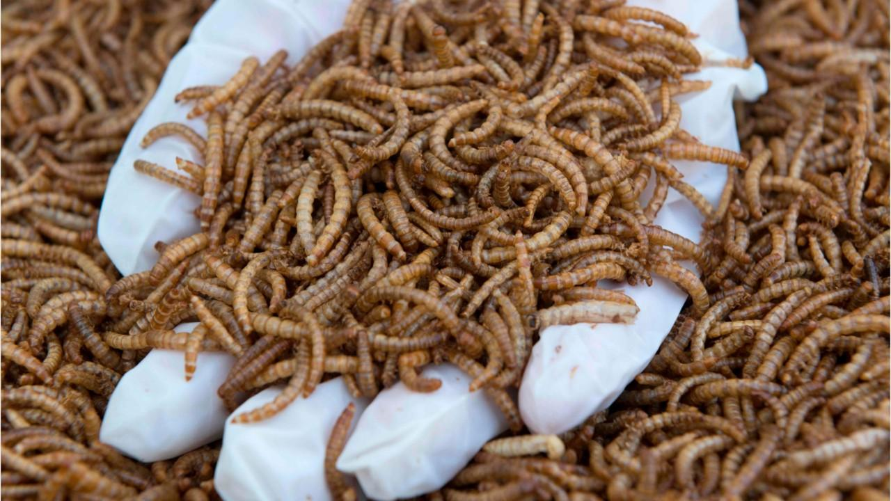 The EU has just authorised insect-based food for humans