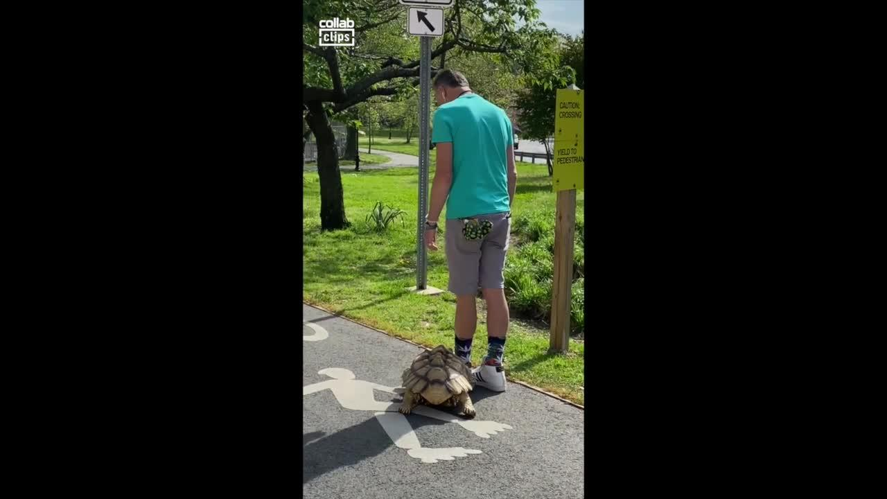 Man takes pet turtle for slow stroll through Central Park in New York