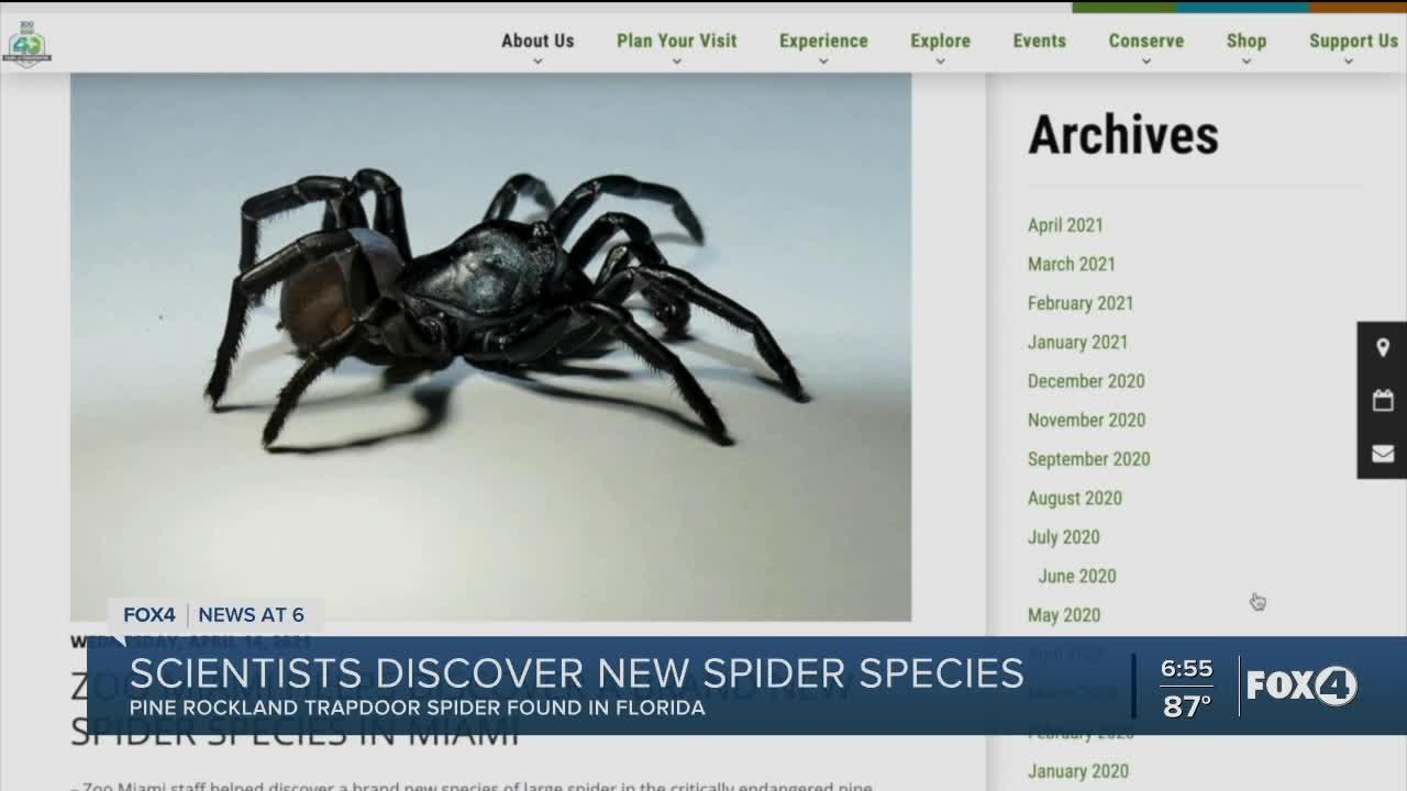 New species of venomous spider found at zoo in Florida